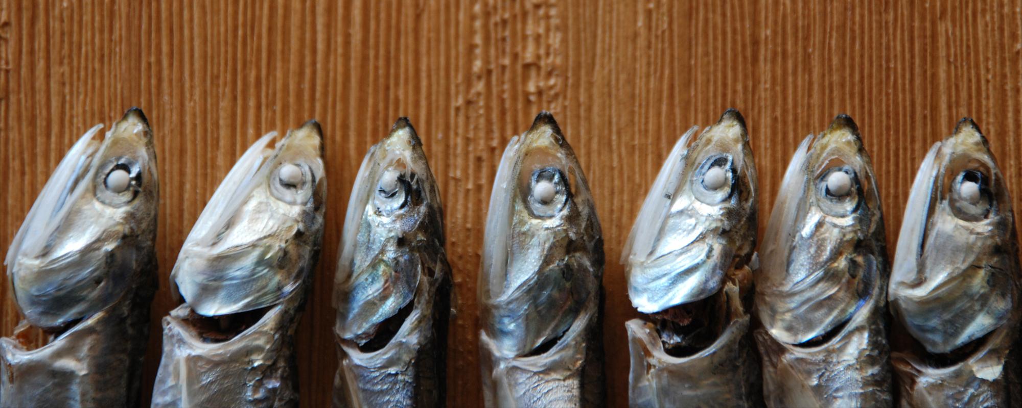 食べる小魚
